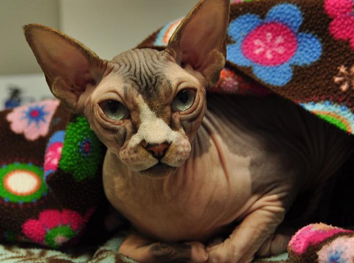 dog-cat-dermatology
