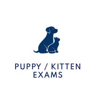 Puppy & Kitten Exams